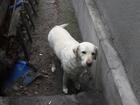 Изображение в   Найдена собака в районе Шолохова/Воровского, в Ростове-на-Дону 0