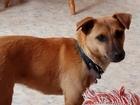 Изображение в   12 апреля приблудилась собака, сука, окрас в Ростове-на-Дону 0