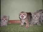 Увидеть фотографию Вязка кошек Очень ласковый котик - приглашает 55678492 в Ростове-на-Дону