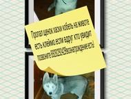 Пропала собака 14. 11. 16г. Г. Ростов на Дону в советском районе пропал щенок ха