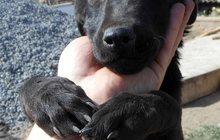 Приют для собак в городе Новочеркасск