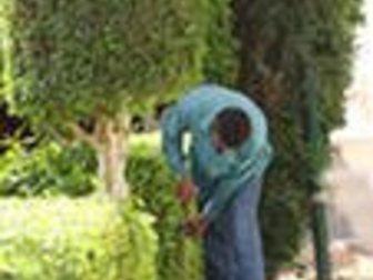 Новое изображение  Садовники, агрономы, биологи, озеленители приглашаются в семьи ростовчан 34712839 в Ростове-на-Дону