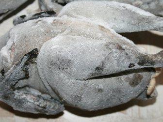 Смотреть изображение  Инкубационные яйца кур китайская шелковая аборигенная, 34761879 в Ростове-на-Дону