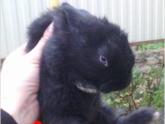 Увидеть фотографию  Продаю крольчат, 35269721 в Ростове-на-Дону