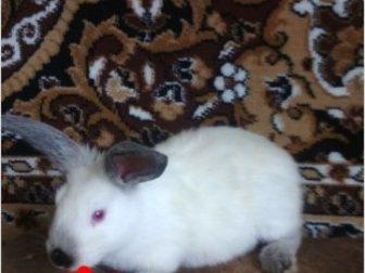 Уникальное foto  продаю крольчат 35286563 в Ростове-на-Дону