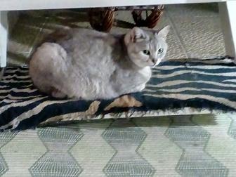 Уникальное фотографию  приму в дар для больных животных 40564737 в Ростове-на-Дону