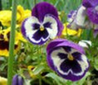 Фотография в   Весна не за горами. Берём садовника!   Садовники в Ростове-на-Дону 2000