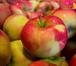 Фото в   Дистанционно-очный курс по плодоводству, в Ростове-на-Дону 10000