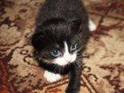 Скачать фото Продажа кошек и котят Котята в дар 33003330 в Раменском