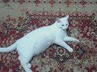 Фото в Help! Находки Люди добрые помогите! ! ! ! пропал домашний в Саяногорске 0