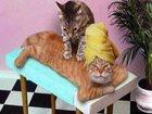 Увидеть foto Массаж массаж на дому 33979170 в Салавате