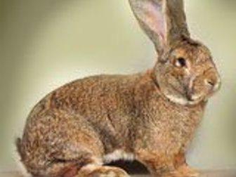 Увидеть foto  Кролики 34299935 в Салавате