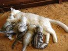 Фотография в   Продаются котята 1, 5 мес здоровые, игривые, в Самаре 0