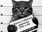 Уникальное фото Разное Валка леса 32771632 в Санкт-Петербурге