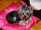 Изображение в Домашние животные Услуги для животных С удовольствием позабочусь о Вашем питомце в Санкт-Петербурге 200