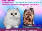 Фотография в   Груминг Салон «ZoO-PERSONA» предлагает широкий в Санкт-Петербурге 1200