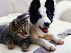 Увидеть изображение Услуги для животных Гостиница для животных 33804749 в Санкт-Петербурге