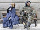 Увидеть foto Услуги для животных Зимний кинологический лагерь- отдых и дрессировка для Вас и Вашей собаки 33804771 в Санкт-Петербурге