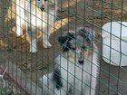 Изображение в Потерянные и Найденные Потерянные . . ноября примерно в . . час потерялся щенок в Санкт-Петербурге 0