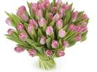 Изображение в Рыбки (Аквариумистика) Растения Мы доставляем цветы по всей России. В нашем в Санкт-Петербурге 453