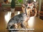 Скачать фотографию Другие животные Стрижка собак и кошек, выезд на дом (Спб) 37665395 в Санкт-Петербурге