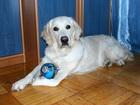 Изображение в Домашние животные Услуги для животных На время вашего отъезда, с удовольствием в Санкт-Петербурге 200