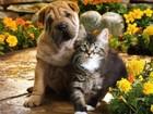 Изображение в Домашние животные Ветеринарные клиники Санкт-Петербург, все районы, соседние города. в Санкт-Петербурге 0