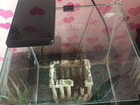 Уникальное изображение Аквариумы Продам! Аквариум на 30 литров Aquael, лампа, пылесос, фильтр 7 000,00 68388319 в Санкт-Петербурге