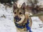 Новое фото  Хорошенький пёсик небольшого размера 68575839 в Санкт-Петербурге