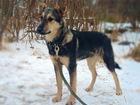 Свежее фотографию  Мистер щенок и его прекрасный нос ищут дом 68602638 в Санкт-Петербурге