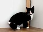 Свежее foto Отдам даром - приму в дар Любознательный котик-исследователь, 9 мес 68861048 в Санкт-Петербурге