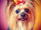 Увидеть фотографию Вязка собак Стрижка кошек и собак, Любые породы, Без наркоза, Выезд на дом, 69594810 в Санкт-Петербурге