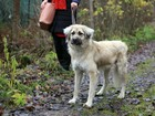 Уникальное foto  Ищет дом собака, всегда излучающая поддержку и тепло 70267486 в Санкт-Петербурге