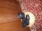 Свежее foto Женская обувь женские полусапожки, производство Италия 71704203 в Санкт-Петербурге