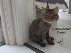 Увидеть фотографию Услуги для животных Стрижка кошек Выборгский район 72407928 в Санкт-Петербурге