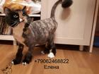 Просмотреть изображение Услуги для животных Стрижка кошек Спб Выборгский район 73800941 в Санкт-Петербурге