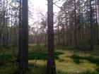 Участок в сосновом лесу. Курортный район, пос Репино. Участо