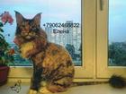 Увидеть foto Услуги для животных Стрижка кошек Спб Адмиралтейский район 80442478 в Санкт-Петербурге