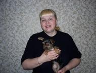 Санкт-Петербург: Вязки собак - любые породы Повяжу собак любых пород, мелких или крупных! При необходимости - подберу пару. При самом первом опыте у собак - прекрасно
