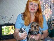 Йорки - продаю щенков и взрослых, Вязка Продаю подростка Йоркширского терьера! Девочку 10 мес. Мини, вес - 1, 6 кг. Короткая мордашка (беби-фейс! ). П, Санкт-Петербург - Продажа собак,  щенков