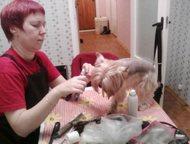Стрижка собак, стрижка йорков и других пород Стрижка, подрезание когтей, мытье,