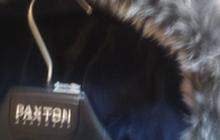 Xterm ( Canada ) продам комбинезон зимний