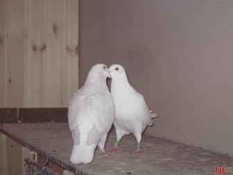 Уникальное фото  Белые голуби на свадьбу 33599518 в Санкт-Петербурге