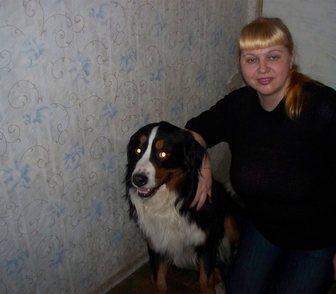Фотография в Домашние животные Услуги для животных Повяжу собак любых пород, мелких или крупных. в Санкт-Петербурге 1500