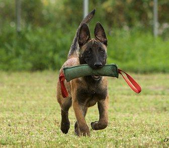 Изображение в   Щенячий сад - стационарное обучение собаки в Санкт-Петербурге 2100