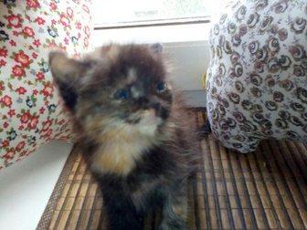 Скачать фото Отдам даром Отдам котенка в добрые руки 33317286 в Саранске