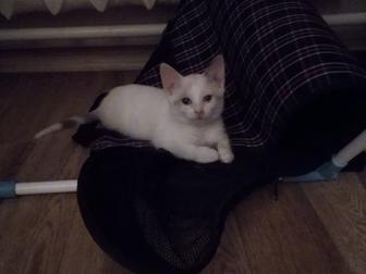 Скачать изображение Отдам даром Отдам котенка в добрые руки 38002385 в Саранске