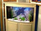 Фотография в   Полный спектр услуг по обслуживанию аквариумов в Саратове 900