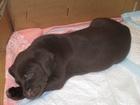 Уникальное фото Продажа собак, щенков отдам в добрые руки щенков 37383591 в Саратове
