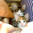 Отдам котят в добрые и заботливые руки